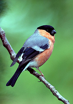 Bird Species Photo Gallery Bird Species Photo Gallery