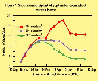 Optimum winter wheat plant population hgca topic sheet no36 any varietal differences in tillering observed at normal plant populations largely disappeared at lower densities when there was less competition between ccuart Image collections
