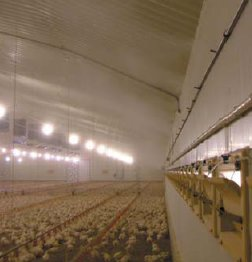 Poultry Solving The Problem Of Heat Stress Pb10543