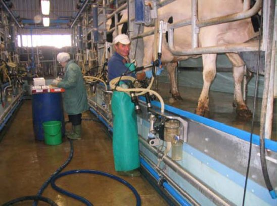 Milk Hygiene On The Dairy Farm A Practical Guide For