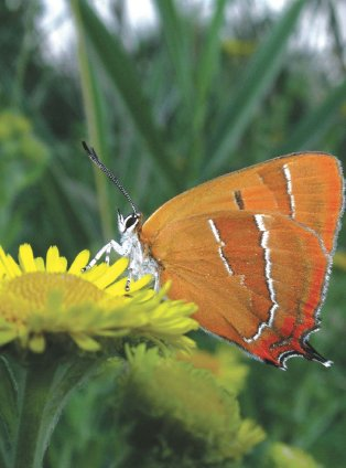 Hedge cutting answers to 18 common questions ne36 1 - Brown butterfly meaning money ...